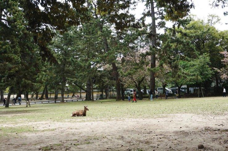 Nara deer park.